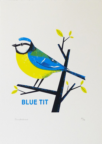Chris-Andrews-Blue-Tit