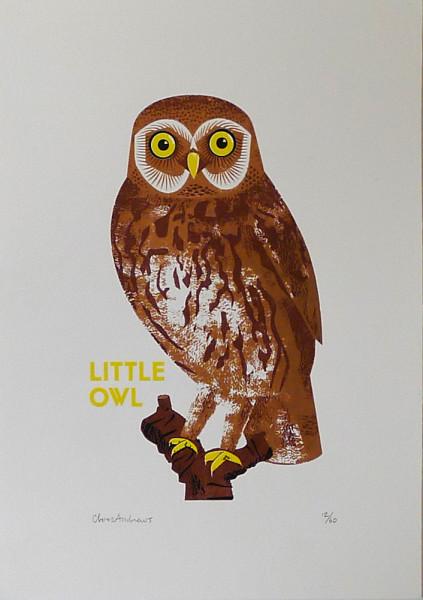 Chris-Andrews-Little-Owl