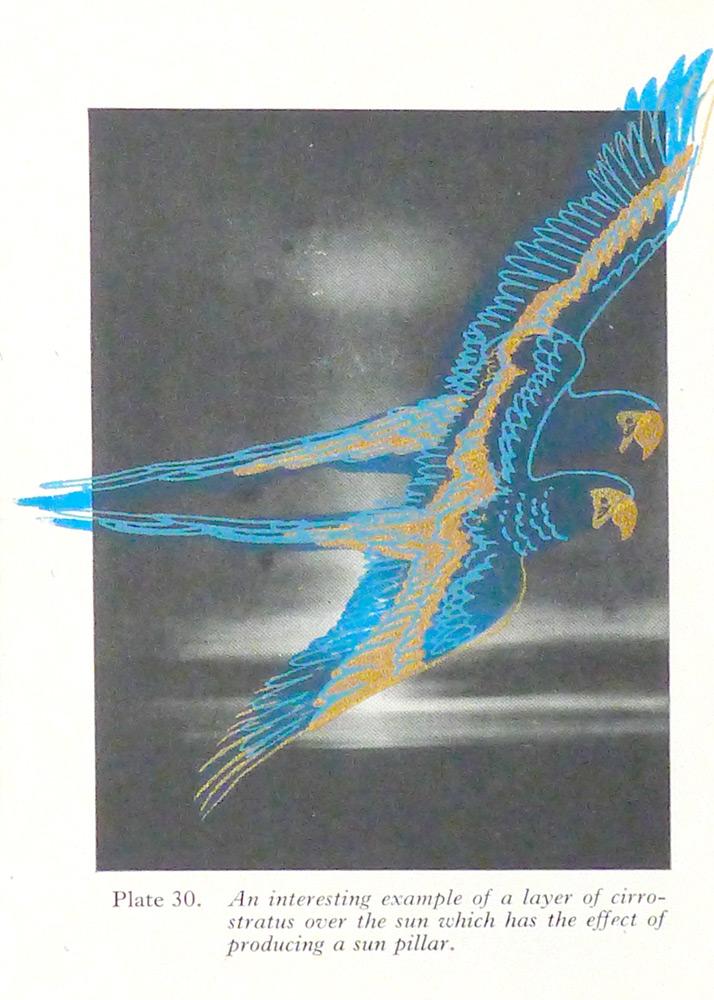 alice-hoult—gold-birds