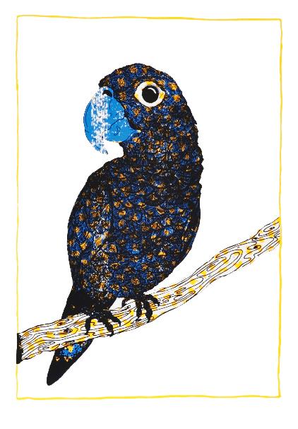 Miranda-Holms-Circus-Parrot
