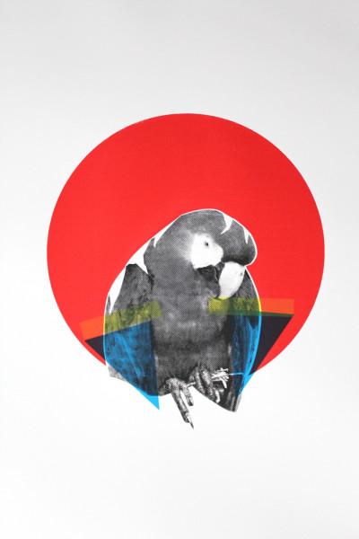 Victoria Langdon - Scarlet Macaw