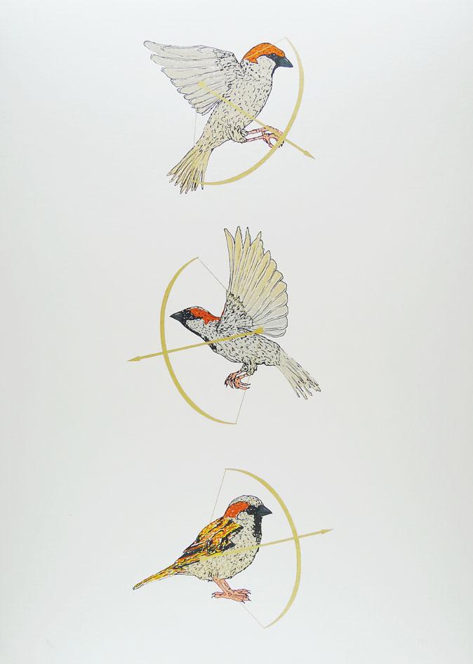Miranda-Holms-Bow-and-Arrows-Sparrow