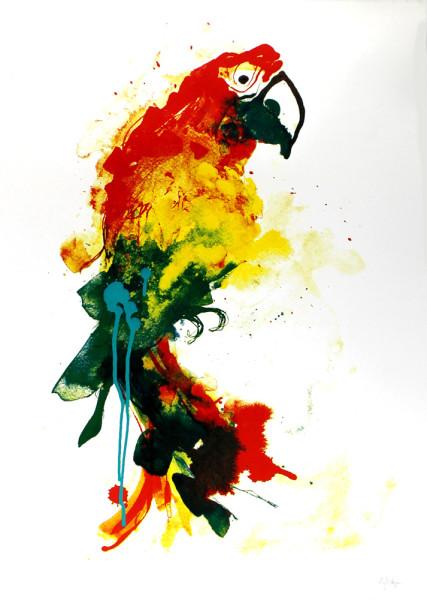 Gavin-Dobson-Parrot