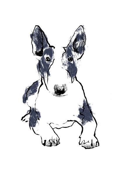 Tiff-Howick-Bull-Terrier