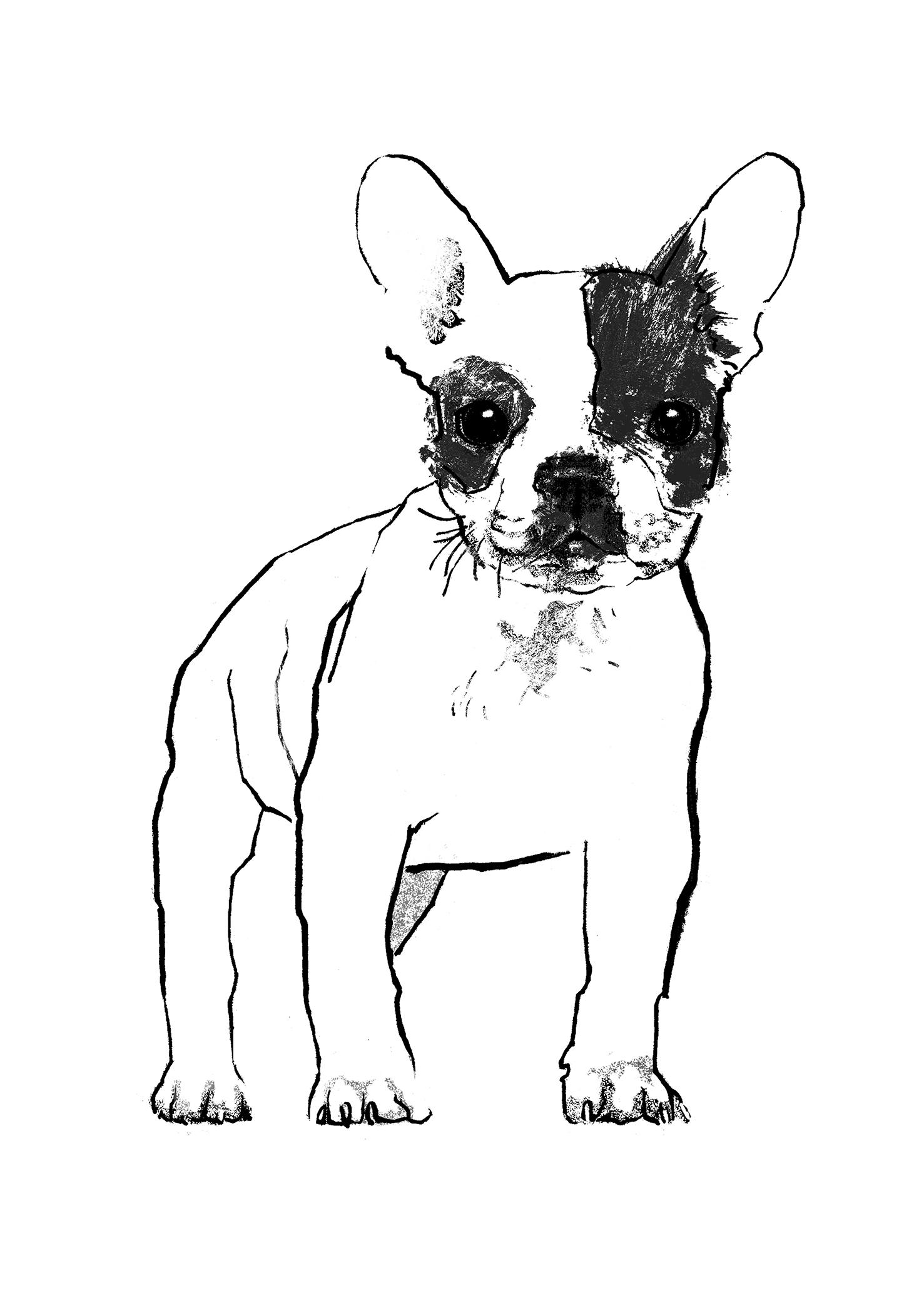 Uncategorized Bulldog Pictures To Print french bulldog print club london tiff howick bulldog