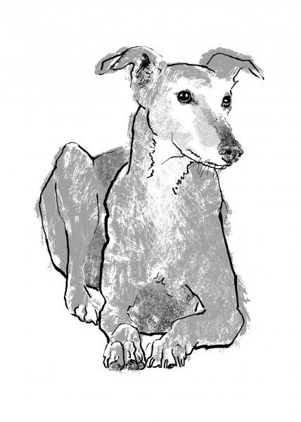 Tiff-Howick-Greyhound