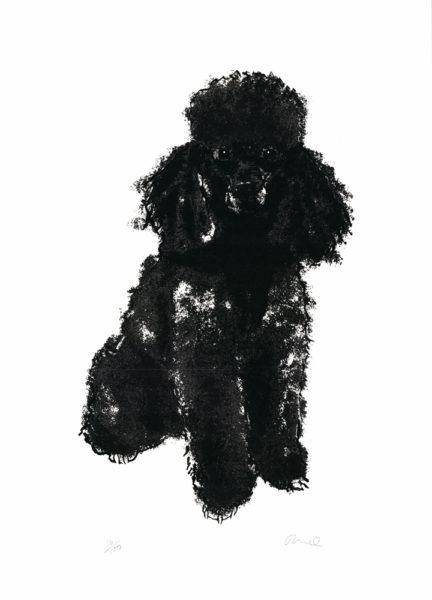 Poodle Tiff Howick Print Club London