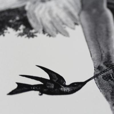 Colibri Dan Hillier Print Club London Screen Print