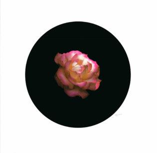Rose 1 by Ricky Byrne Print Club London Screen Print